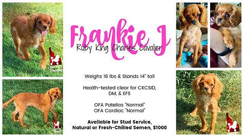 Frankie J collage.jpg