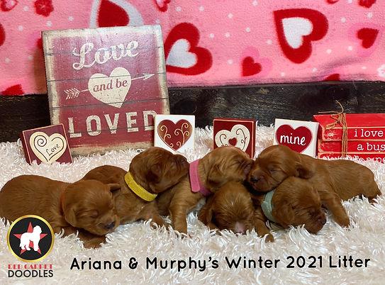 Ariana W21 Newborns(1).jpg