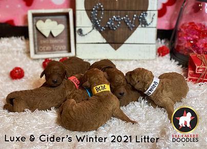 Luxe & Cider's W21 Newborns (1).jpg