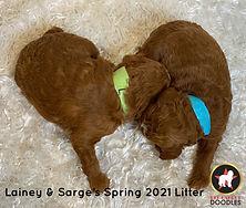 Lainey's SP21 Litter (3).jpg