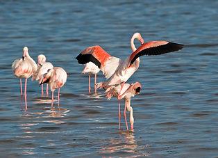 Un sito completamente immerso nella macchia mediterranea che ospita un importante patrimonio biologico di flora e fauna.