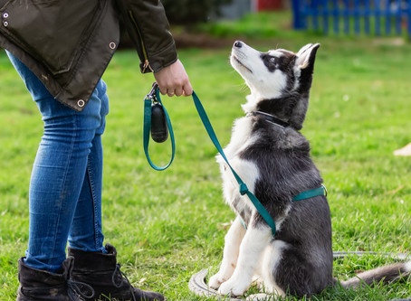 Three Ways Dog Obedience is Important
