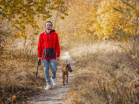 4 Advantages of Off-Leash Dog Training