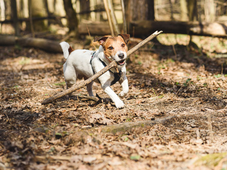 Great Tips For Keeping Your Dog Mentally Sharp