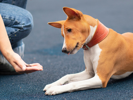 Does Dog Behavior Training Help With Aggression?