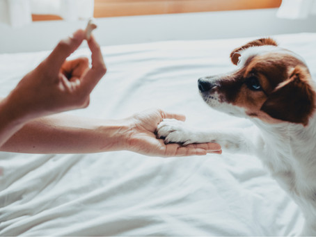 How Getting A Dog Can Improve Your Life