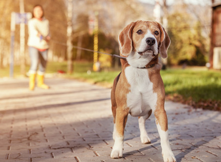 Understanding a Dog's Aggression and Anxiety