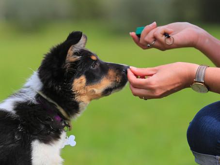 Three Myths About Dog Training