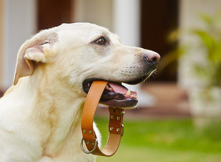 Dealing with an Unruly Pup: Signs Your Dog Needs Obedience Training
