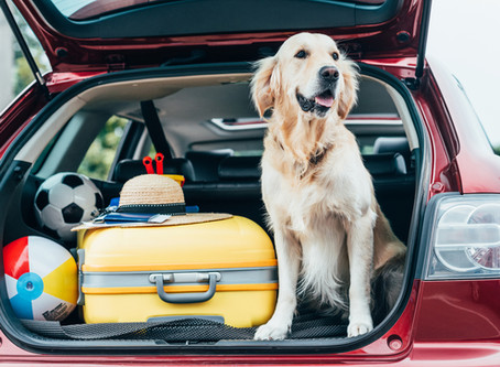 Tips to Help Your Dog Relax in the Car