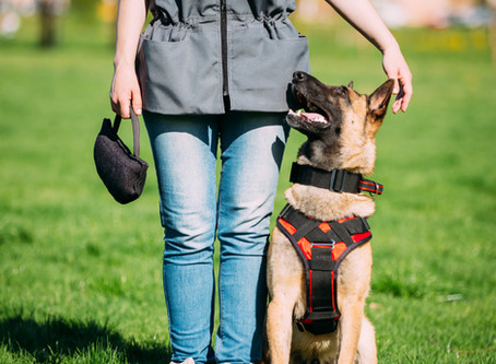 Benefits Of Training Your Dog