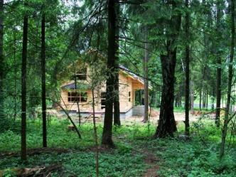 Законопроект «лесной амнистии» рассмотрят в апреле в первом чтении в Госдуме