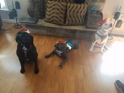 Braveheart, Roxy, and Rocky