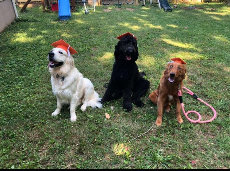 Ollie, Skol and Marley
