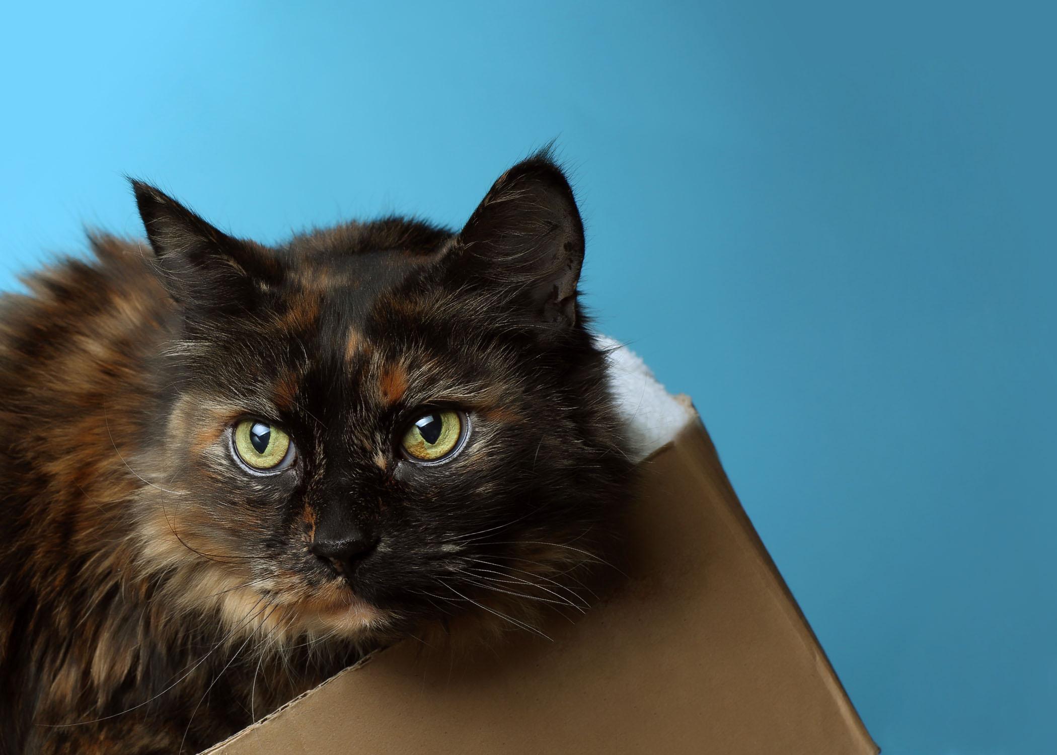 Sophie, Owner