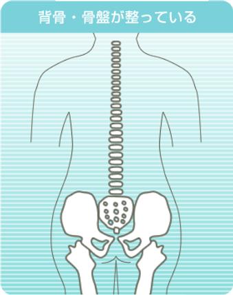 背骨や骨盤が正常