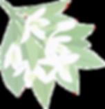 タイ古式マッサージ 足つぼ オイルマッサージ リラクゼーション 癒し ストレス 福岡市中央区薬院 