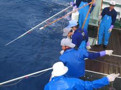 鮪延縄漁法