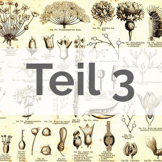 Angewandte Botanik: Pflanzenfamilien, Signaturen, Heilpflanzen Teil 3 (AUSGEBUCHT)