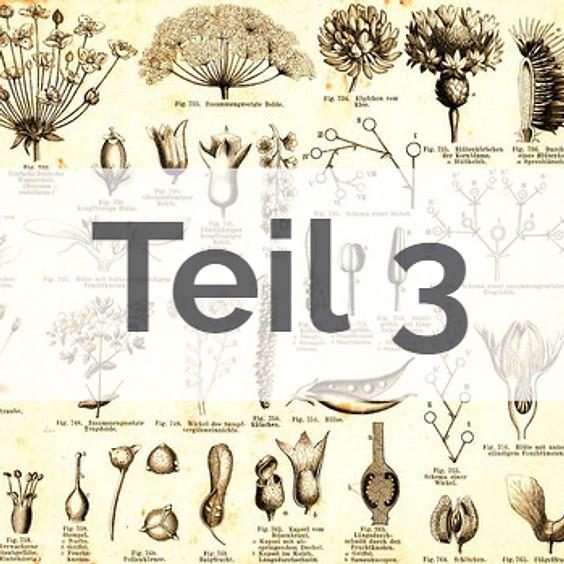 Angewandte Botanik: Pflanzenfamilien, Signaturen, Heilpflanzen Teil 3 (BASIS-MODUL)