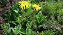 Heilpflanzen, Wildpflanzen und sekundäre Pflanzenwirkstoffe (BASIS-MODUL)