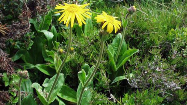 Heilpflanzen, Wildpflanzen und sekundäre Pflanzenwirkstoffe (BASIS-MODUL) (AUSGEBUCHT)