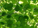Wildnahrung: Was Bäume und Sträucher uns bieten (BASIS-MODUL)