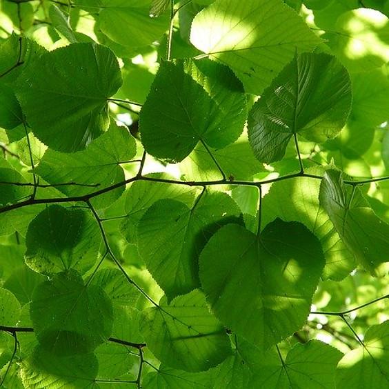 Wildnahrung: Was Bäume und Sträucher uns bieten (neu, wieder ein Platze frei)