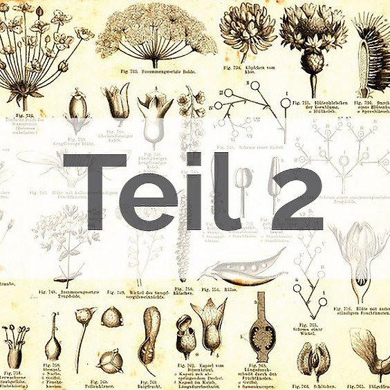 Angewandte Botanik: Pflanzenfamilien, Signaturen, Heilpflanzen 2 (BASIS-MODUL) (1)