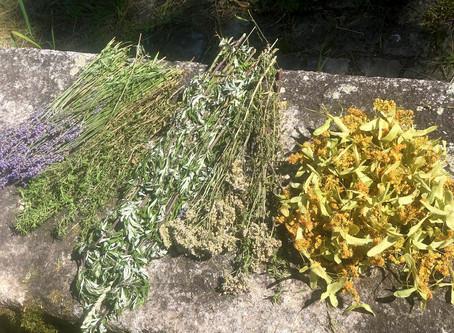 Zentrieren und Kräuter sammeln
