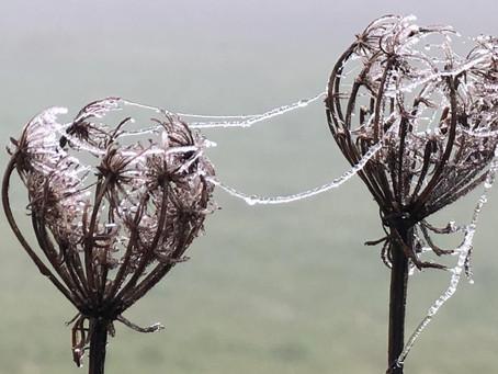 Wildpflanzen im Winter / bizarre Schönheiten