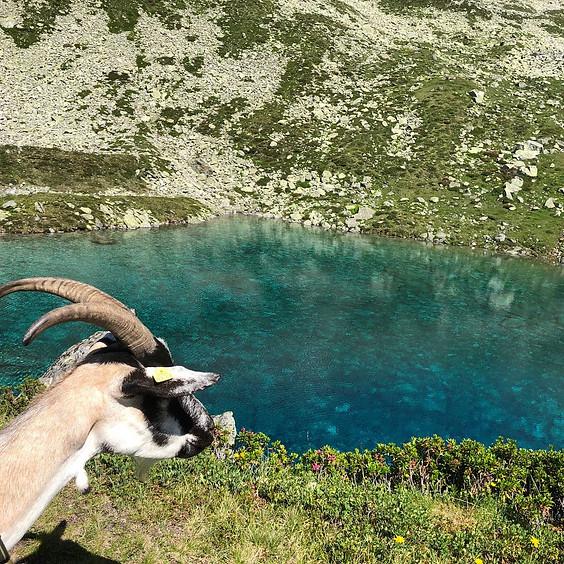 Wildkräuterferien auf der Ziegenalp in Graubünden