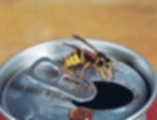 Wespen bestrijden.jpg