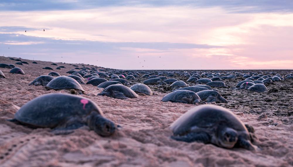 ©Great Barrier Reef Foundation und Queensland Government