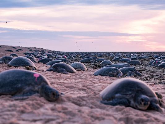 Great Barrier Reef – Mit einer Drohne Schildkröten zählen