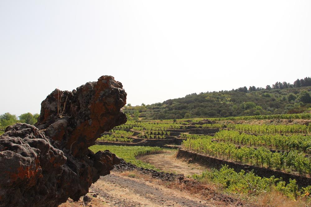 Weinberge von Passopisciaro am Ätna