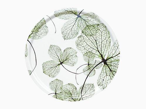Rundes Tablett, grüne Hortensien
