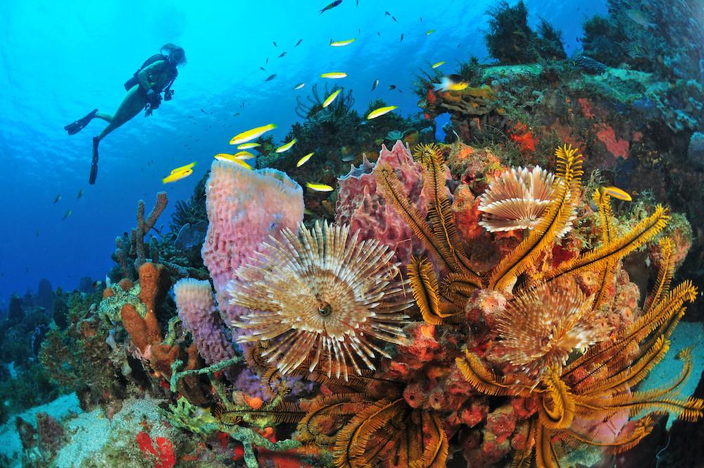 © Comité Martiniquais du Tourisme/R.Pakiela