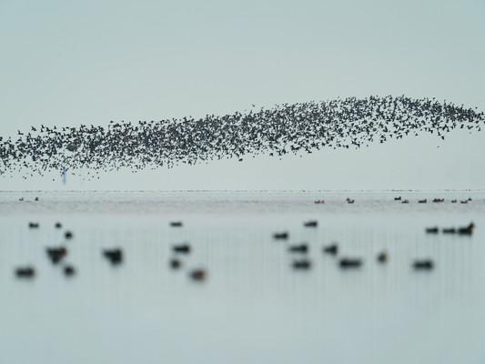 Zugvogelzeit über Sylt