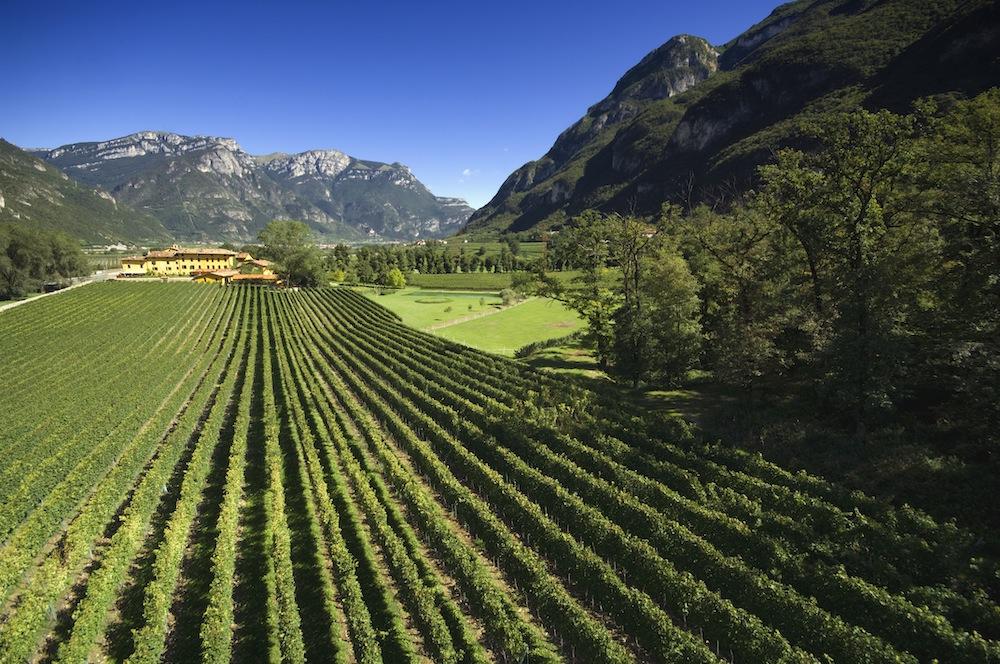 Das Weingut San Leonardo