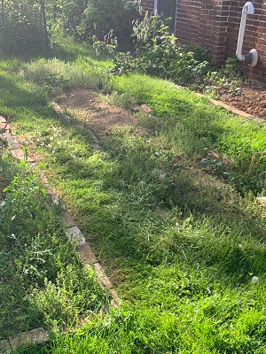 Overgrown grassy area where there used to be a vegetable garden