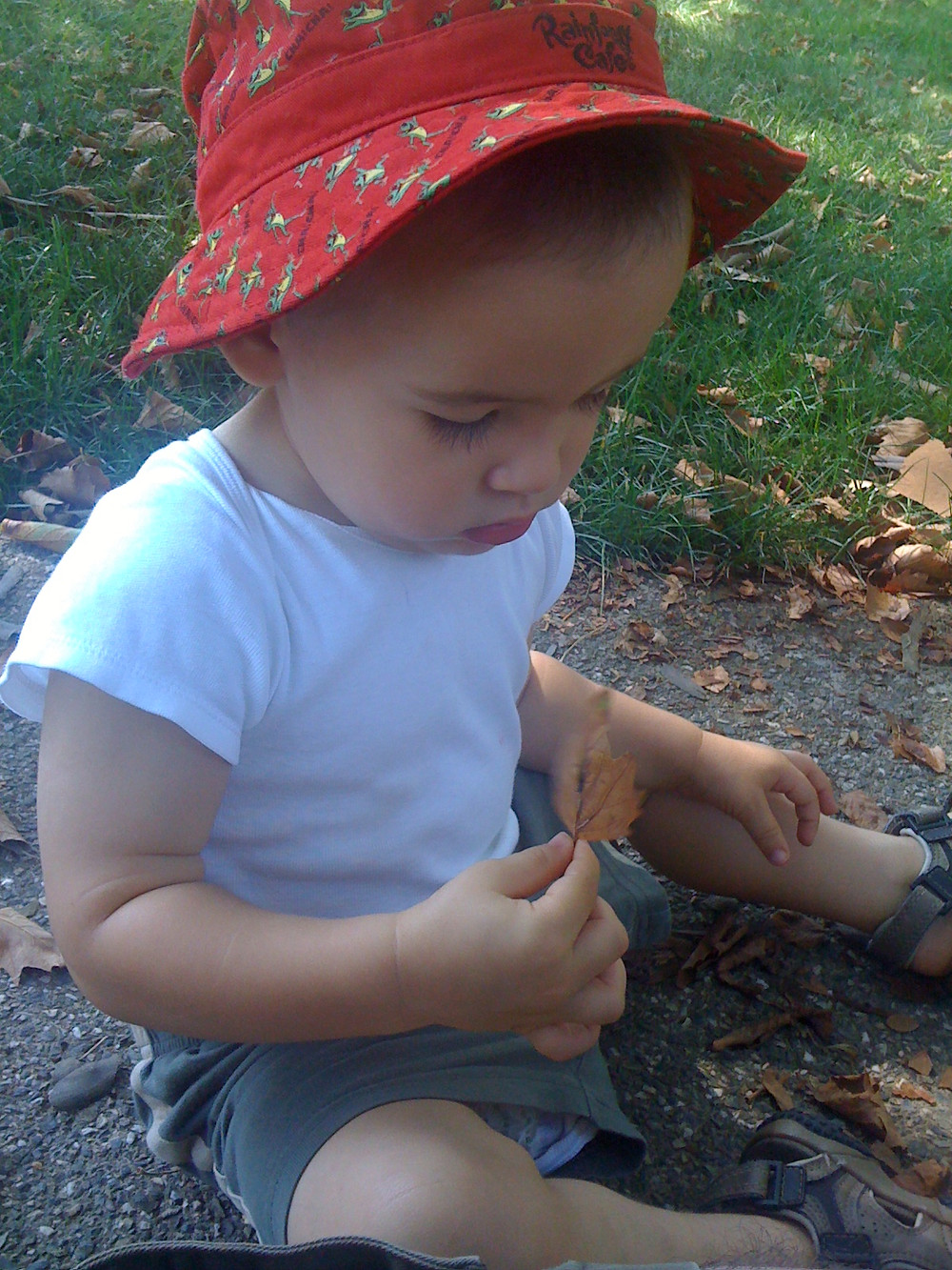 Toddler in a red hat, white t-shirt, and shorts. Sitting by the edge of the grass. Keeping me company while I pull weeds. He is holding a leaf.