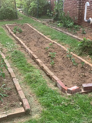 Rectangular raised bed for a vegetable garden edged with red bricks