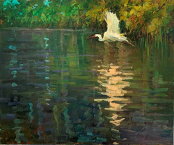 bird in mangroves
