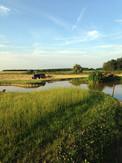Landscapes-pond.jpg