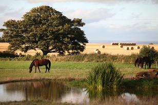 Landscapes-horses-bales.jpg