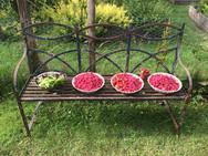Gardens2-garden-produce.jpg