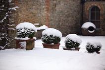 Gardens2-snowy-box-courtyard.jpg