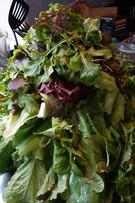 Food-greens.jpg