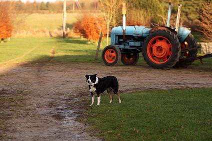 Landscapes-dog-tractor.jpg
